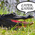 Later Gator Greeting Card by Al Powell Photography USA