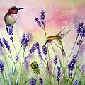 Lavender And Hummingbirds by Patricia Pushaw