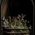 Lavender Fire by Anne Gilbert