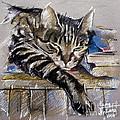 Lazy Cat Portrait - ...