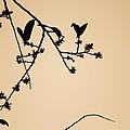 Leaf Birds by Darryl Dalton