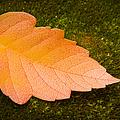 Leaf On Moss by Adam Romanowicz