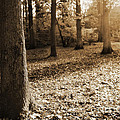Leafy Autumn Woodland In Sepia by Natalie Kinnear
