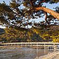 Leaning Pine Tree Arashiyama Kyoto Japan by Colin and Linda McKie