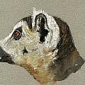 Lemur Head Study by Juan  Bosco