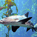 Leopard Shark by Barbara Snyder