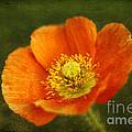 Les Fleurs by Darren Fisher