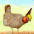 Lesser Prairie Chicken by Jack Pumphrey