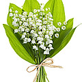 Lily-of-the-valley Bouquet by Elena Elisseeva