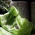 Lily Of The Valley Rosary by Diana Lehmann