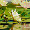Lily Pond by  Fli Art