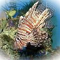 Lion Fish 2 by TN Fairey