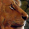 Lion King by Jurek Zamoyski
