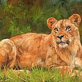 Lioness by David Stribbling