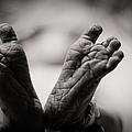 Little Feet by Adam Romanowicz