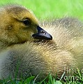 Little One by Kathleen Struckle