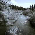 Little Spokane River Beauty by Daniel Hagerman