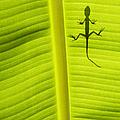 Lizard Leaf by Tim Gainey