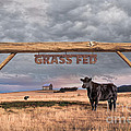 Log Entrance To Grass Fed Angus Beef Ranch by Susan McKenzie