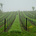 Lone Figure In Vineyard In The Rain On The Mission Peninsula Michigan by Mary Lee Dereske