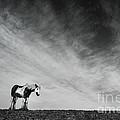 Lone Horse by Julian Eales