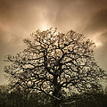 Lone Tree Print by Amanda And Christopher Elwell