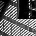 Long Shadows by Steven Milner