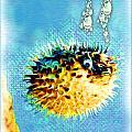 Long-spine Fish by Daniel Janda