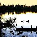Lost Lagoon At Sundown by Will Borden