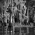 Louisiana Bayou by Mountain Dreams