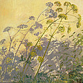 Lovage Clematis And Shadows by Timothy  Easton