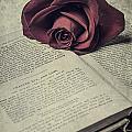 Love Stories by Joana Kruse
