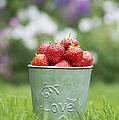 Love Strawberries by Tim Gainey