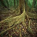 Lowland Tropical Rainforest by Ferrero-Labat