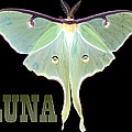 Luna 1 by Mim White