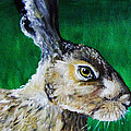 Mad As A March Hare by Stacey Clarke