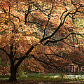 Magnificent Autumn by Anne Gilbert