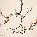 Magnolia Chandelier