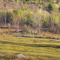 Maine Blueberry Field In Spring by Keith Webber Jr