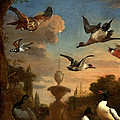 Mallard Golden Eagle Wild Fowl In Flight by Melchior de Hondecoeter