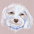 Maltipoo With An Attitude by MM Anderson