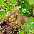 Mama Bird by Frozen in Time Fine Art Photography