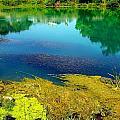 Mammoth Springs Water Vegetation by Cindy Croal