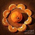 Mandarin - Vignette Print by Kaye Menner