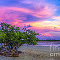 Mangrove By The Bay by Marvin Spates