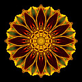Marigold Flower Mandala by David J Bookbinder