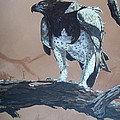 Martial Eagle by Robert Teeling