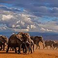 Matriarch On Amboseli by Pieter Ras