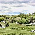 Meadow II by Chuck Kuhn