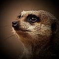 Meerkat 6 by Ernie Echols